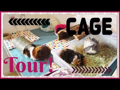 Cage Tour and Pet Room Updates April 2017!  Squeak Dreams
