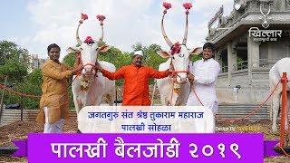 Khillar Maharashtrachi Shaan । तुकाराम महाराज रथाची बैलजोडी । २०१९ । Khillar