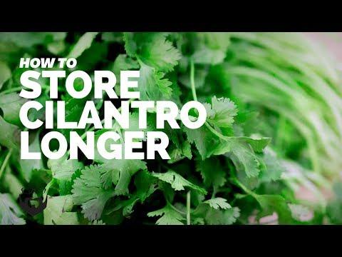 How to Store Cilantro Longer
