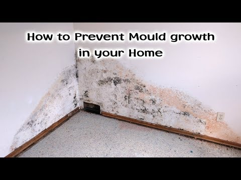 How to Prevent Mould in Your Home - Asbestos Awareness