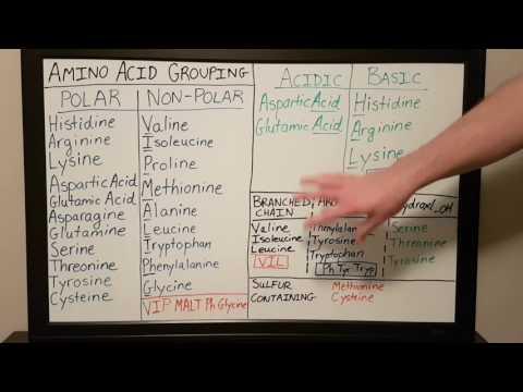 Amino Acid Grouping - Basics for Beginners - Biochemistry Lesson
