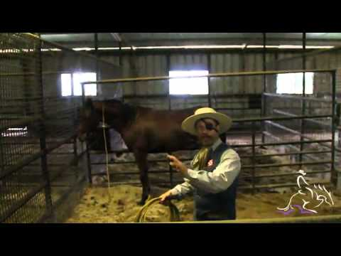 Catching Your Horse Safely with a Rope - Mark Lyon