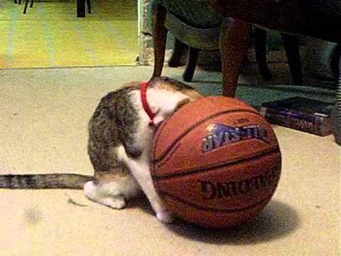 Basketball, you're doing it wrong...