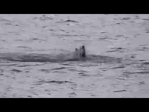 Seals playing at the bottom of my garden