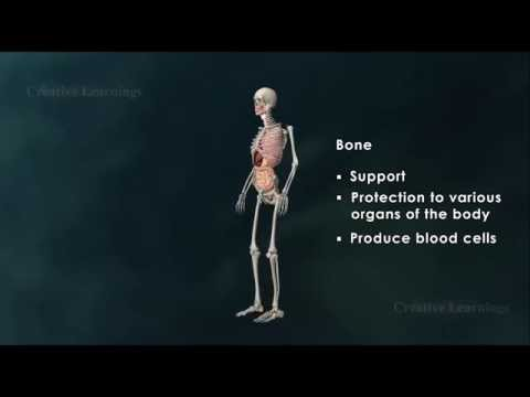 Structure of Bone|Anatomy of Bone|3D Animation|Biology