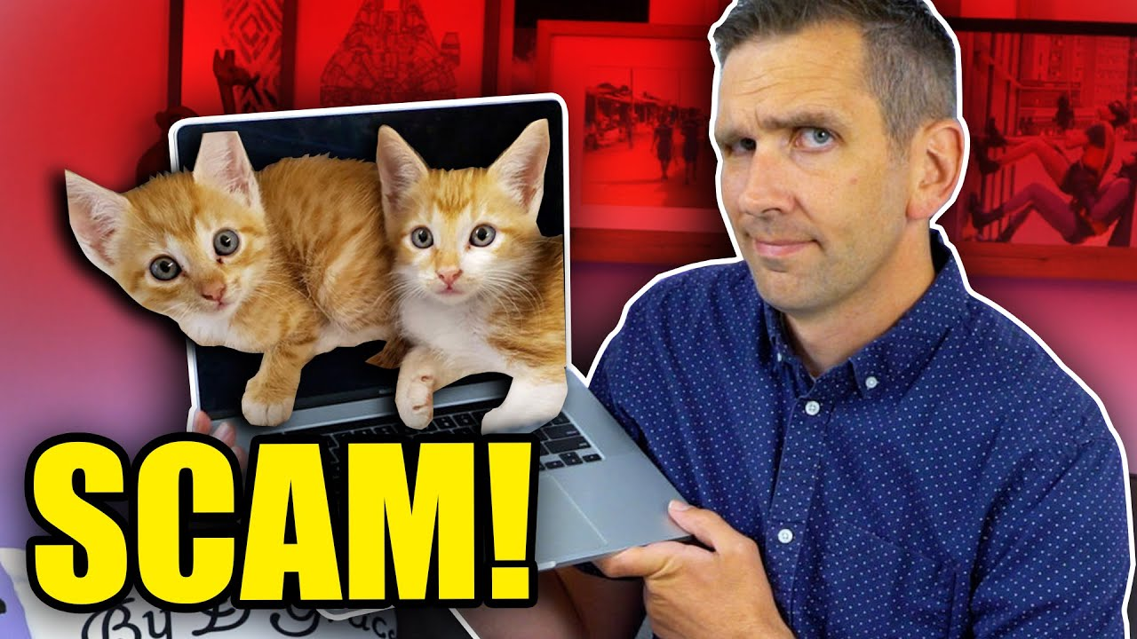 Watch Out for Cat Scammers!
