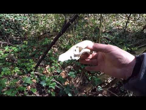 Town Creek Treasure Hunt: Quaint Little Waterway