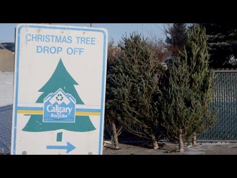 Christmas Tree Recycling - Report to Calgarians