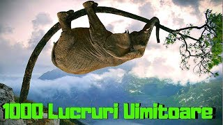 Top 1000 Lucruri UIMITOARE