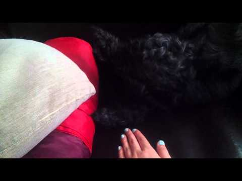 DOG KEEP BOUNCING HER LEG