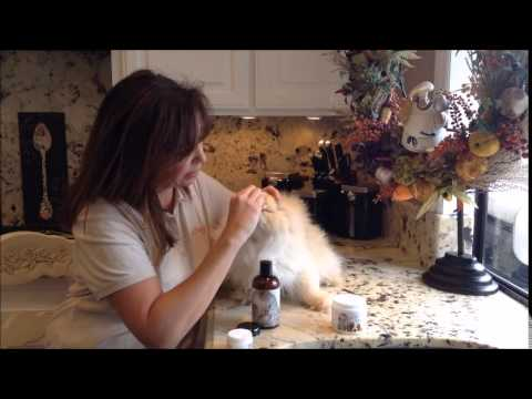 How to: Eye Envy Tear Stain Remover for Cats