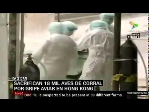 China: 18 thousand birds killed to avoid bird flu