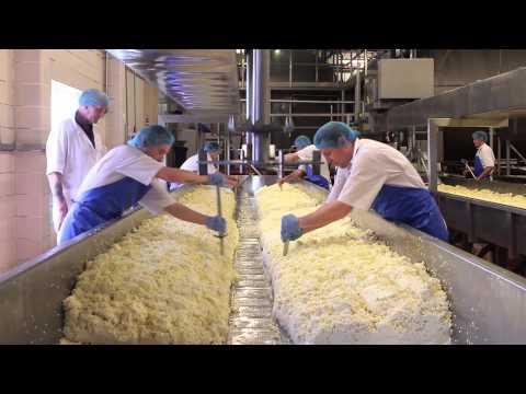 Cheese Making Process
