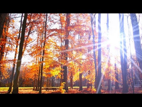 Free Stock Footage Falling Leaves Motion Background HD 1080P (Natural Color Version)