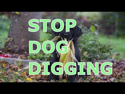 How to Stop Dog From Digging Under Fence ,Yard, Garden and Plants