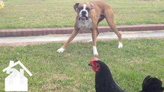 Hilarious Pet Fails To Make You Laugh | Best Pets EVER!
