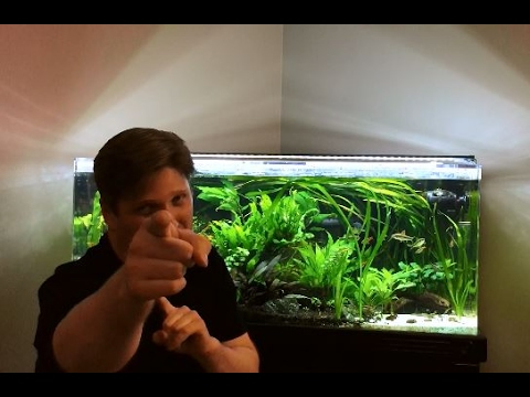 Down and dirty with planted aquarium substrate