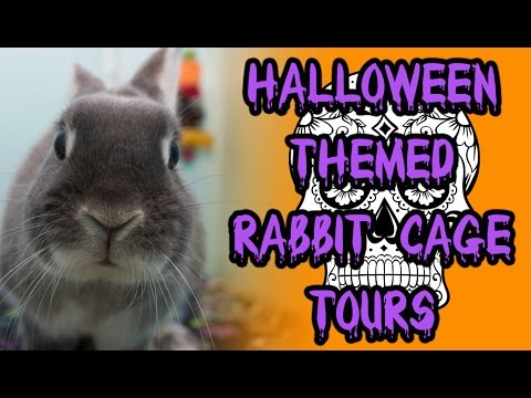 BudgetBunny: Halloween Themed Rabbit Cage Tours | October 2015