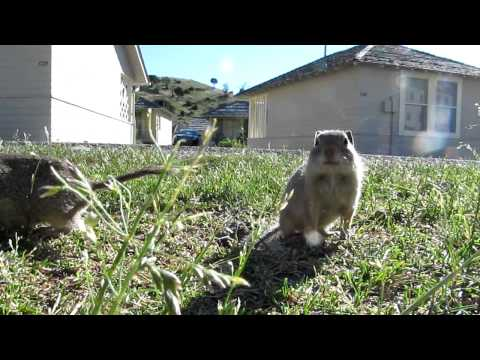 Squirrel Emerges From Burrow
