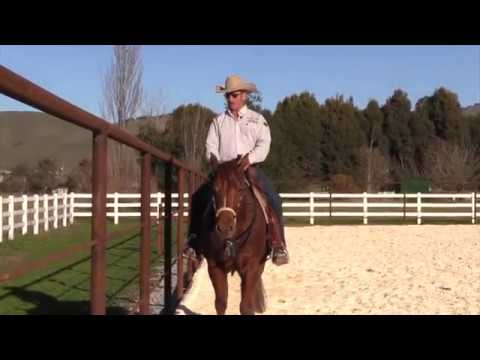 What to do when a horse squashes your leg on the fence