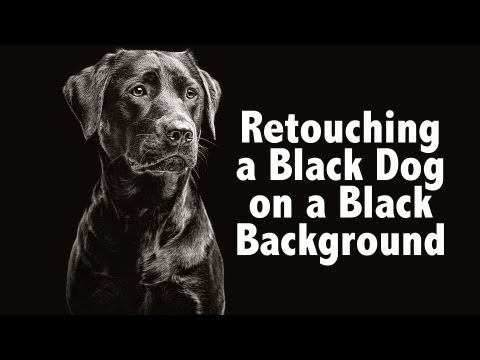 How To Photoshop Black Dog on Black Background