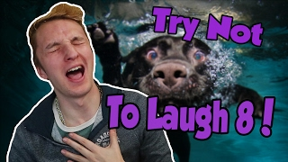 Try Not To Laugh Challenge 8 (Funny Animals Edition)