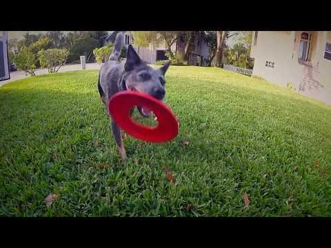 Drug Sniffing Dogs PKG