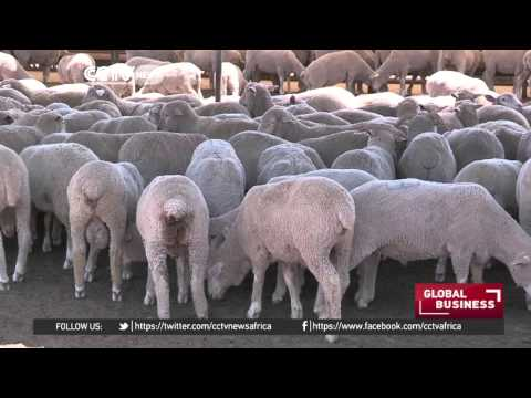 Harsh weather conditions in South Africa force increase of beef prices