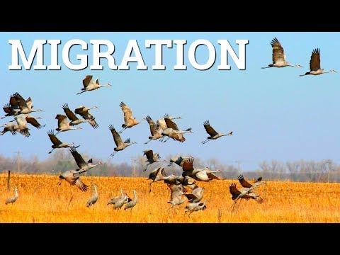 WordPress.com to WordPress.org Migration - How To Move Your Blog to Self Hosted WP