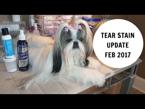 DOG TEAR STAIN UPDATE FEB 2017