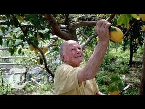 A Legacy of Lemons on the Amalfi Coast - 2013 | The New York Times