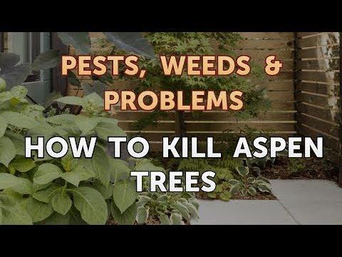 How to Kill Aspen Trees