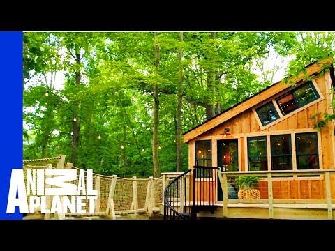 Grace VanderWaal's Got Treehouse