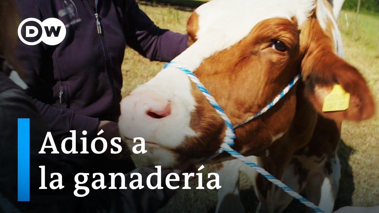 La ganadería en entredicho: salvar animales del matadero | DW Documental