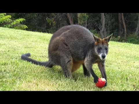 Australia Teaser