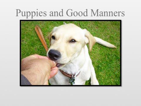 Puppy manners and dog obedience. How to gain control of a puppy.