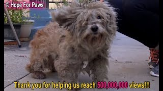 This rescue and shocking transformation will amaze you!!  Celebrating 500 million YouTube views!