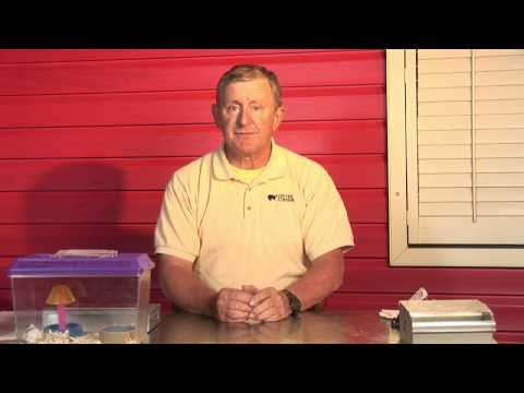 Mice Pest Control : How to Get Rid of Mice in a Car