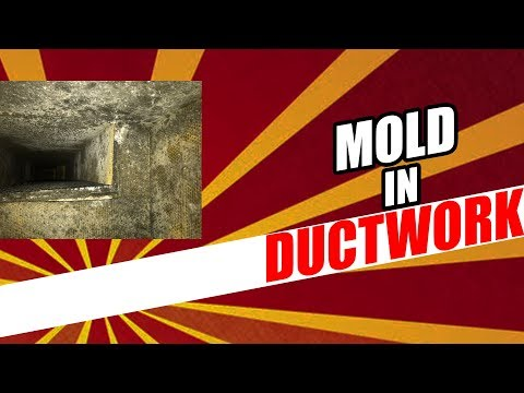 How To Inspect Ducts For Mold
