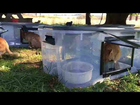 DIY Feeding station for outside/feral cats.