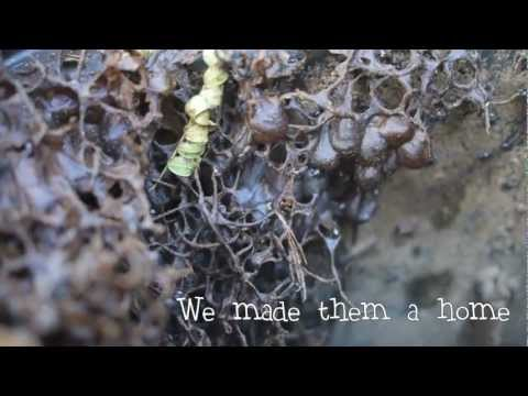 Australian Stingless Bees - Making a Hive 🐝