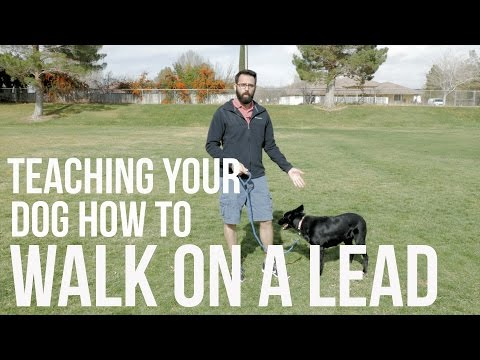 How To Train Your Dog Not To Pull - Loose Lead Walking Video