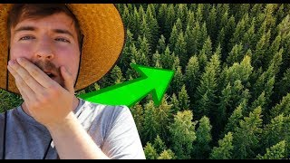 Mr Beasts plants 20'000'000 TREES