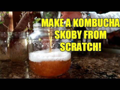 HOW TO MAKE YOUR OWN KOMBUCHA SCOBY! EASY