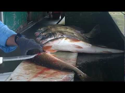 how to fillet redfish and black drum on the halfshell