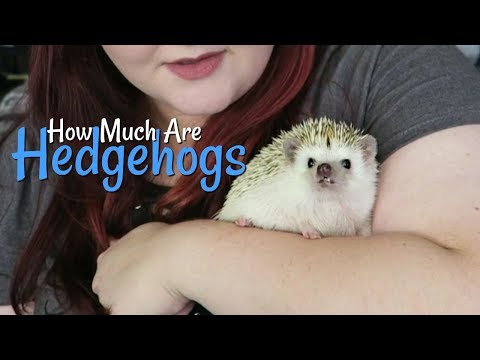 How Much Do Hedgehogs Cost?