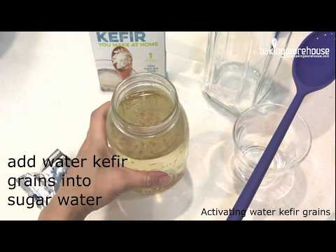 Activating dehydrated Water Kefir Grains(Part 1)