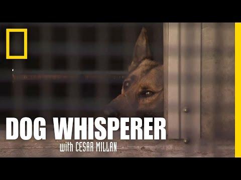 Reading Dog Behavior | Dog Whisperer