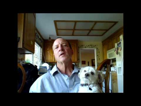 Hivesallergies Benadryl Dogs