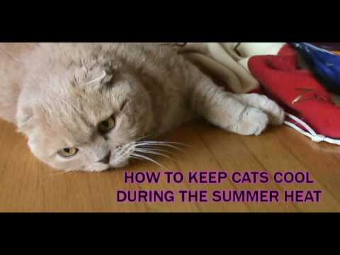 HOW TO KEEP CATS COOL DURING THE SUMMER HEAT: hot weather pet care tips, prevent cat heatstroke